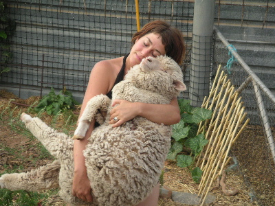 to australian sheep cruelty